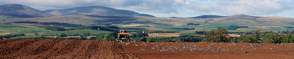 tractor with cheviots in background